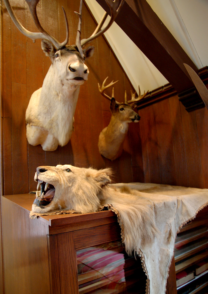 Lion Rug, Caribou and Deer Heads