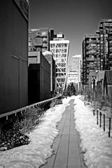 pathway leading... ? (damonabnormal) Tags: city nyc newyorkcity urban blackandwhite bw ny newyork niko
