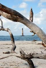 Driftwood (jmberman1) Tags: ocean lighthouse beach southcarolina charleston driftwood follybeach morrisislandlighthouse