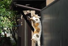 cats_2011-04-22_3