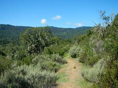Trail 10 Habitat Sector 41 C1 JRBP (Toni Corelli) Tags: jasper ridge preserve biological