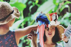 Kids, Macaw and Money (Captured by Bachi) Tags: lovelife love picoftheday pics flickr photography photographer bird birds me new money macaw kids