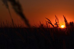 My very first sunset ... (Gudkov A) Tags: sunset summer field heat sun silhouette