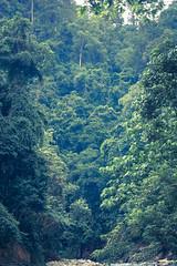 Bukit Lawang, Sumatra (goossi) Tags: bukit lawang sumatra selva indonesia