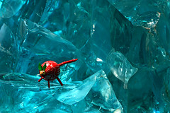 Arctic Snipe (night2061) Tags: lighting canon rebel glaciers blueglass xsi tableshot snipe 450d night2061 dylanbrazil