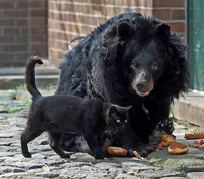 らばQ:仲良しだったクマに死なれた猫、ショックを受ける
