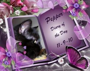 Pepper Diary of the Day - 11-09-2010