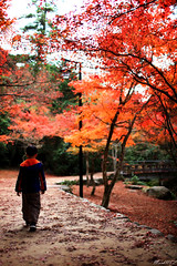 Lonely Autumn Walk (MarkNKL) Tags: autumn leaves japan garden botanical natural mark walk hiroshima miyajima ng markng marknkl