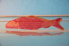 Fish - 334:365