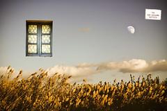 Quando penso a te Giugno  vicino. (fiorsa) Tags: sardegna estate finestra cielo campo aria nuovo avena respiro mediocampidano gruppodinterventogiuridico