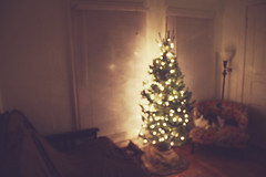 We got our tree. (Sarah Jane (LovelyEmberPhotography)) Tags: chair december kitty christmastree livingroom pica justthelights nodecorationsyet itmakesthewholeapartmentsmellsogood