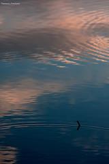 Troppo (poco?) (Francesco.Lorusso) Tags: sunset nature canon landscape eos la bologna reflexions 70200 f4 oasi rizza bentivoglio 40d