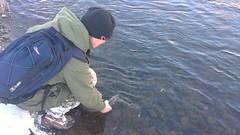 4lb Grilse (salmoferox) Tags: winter snow river scotland fishing catchrelease 4lb grilse