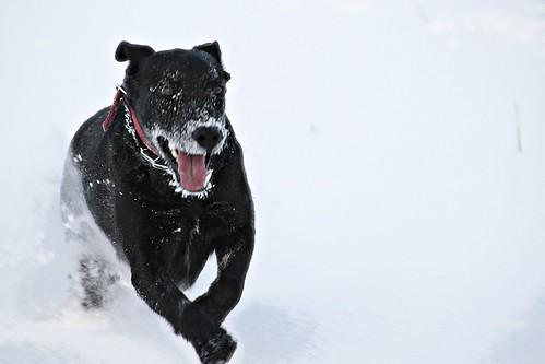 Морозное настроение: собачья радость