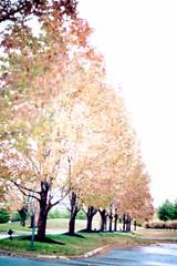 Stop... and enjoy the life. (mexicois) Tags: autumn trees usa fall leaves hojas us leaf rboles unitedstates kentucky otoo louisville estadosunidos etatsunis lightroom3