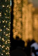 Natale d'Oro (scarpace87) Tags: christmas money gold lights dof bokeh coins commerciale business bologna luci manual natale consumismo economy consumerism galleria economia oro denaro commercio soldi manuale affari 85mmf14ais nocpu