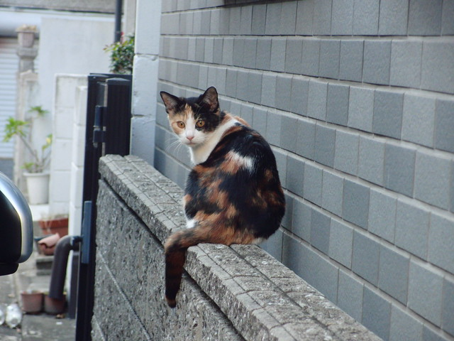 Today's Cat@2010-12-11
