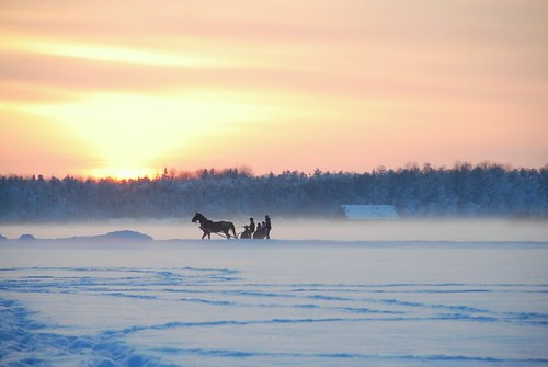 Horse-Drawn Sleigh Rides in Estonia