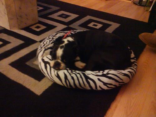 Bandit's new bed