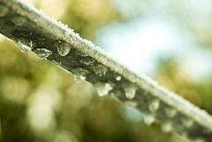 Goccioline (Lorenzo Benvenuti) Tags: snow ice nikon pisa tuscany neve toscana 50 freddo ghiaccio valdera d80 soiana terricciola 500px soianella