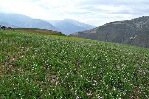 Cordillera Blanca - Caraz, Peru