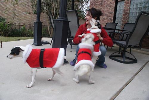 Christmas Terriers