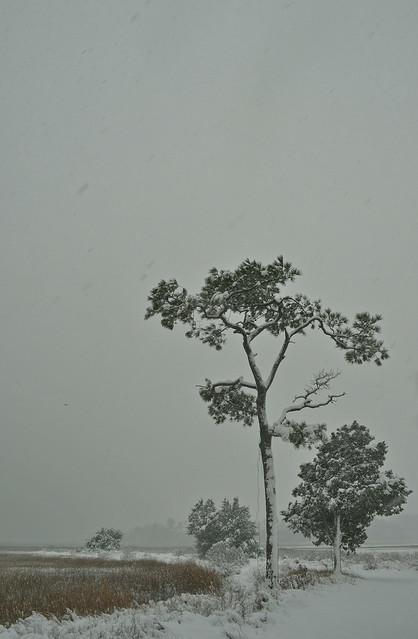 Lone Pine (2)