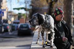 Happy New Year to Everyone! (Icker_Malabares) Tags: street italy dog rome roma cane italia garbatella vincenzopisani