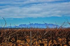 Montserrat entre vinyes des d'Avinyonet del Penedès (MARIA ROSA FERRE) Tags: montserrat wlees510139