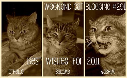 Weekend Cat Blogging #291