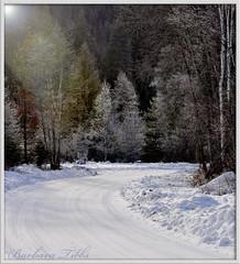 A Winter Ride (Explored) (misst.shs) Tags: road trees winter nikon frost explore flare hss northidaho d90 explored photoshopcs3 grousecreekroad sundaysliders increasedlevels ampedupsaturation intensifylensflare