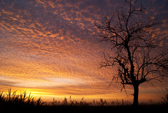 Good Morning 2011!! (Osvillegas) Tags: sun black tree arbol amanecer lugares goodmorning newday 2011 arbolseco nuevodia cierloespectacular