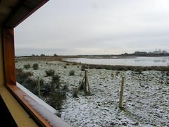 Portbury Wharf Nature Reserve, Somerset