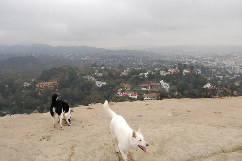 Runyon Canyon Dog Park in the Hollywood Hills.