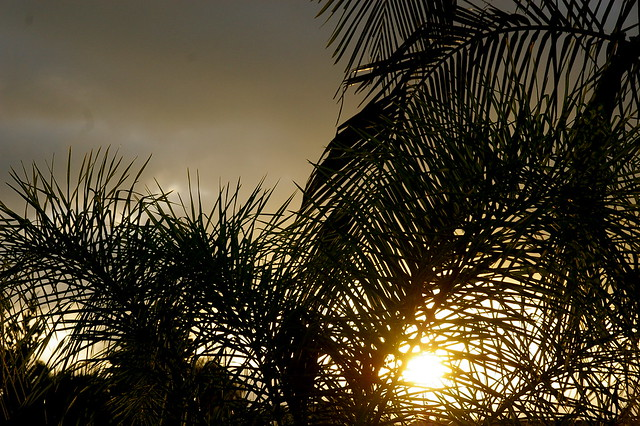 sunset through the omnipresent palm trees