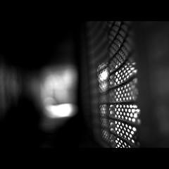 heute sehr sparsam (~janne) Tags: light shadow white black berlin fence 50mm licht dof tunnel olympus minimal zaun schatten schlosspark schwarz charlottenburg wetzlar weis leitz janusz e520 ziob