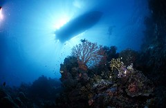 Bali diving Dive Concepts_030