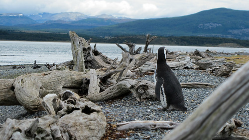 Penguin Island in the Beagle Channel - Tierra del Fuego, Argentina