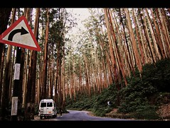 Vast Pine Forest.. (y'O'gs) Tags: road weather pine forest long estate tea silence valley ooty chilled twisting pindrop indianghats