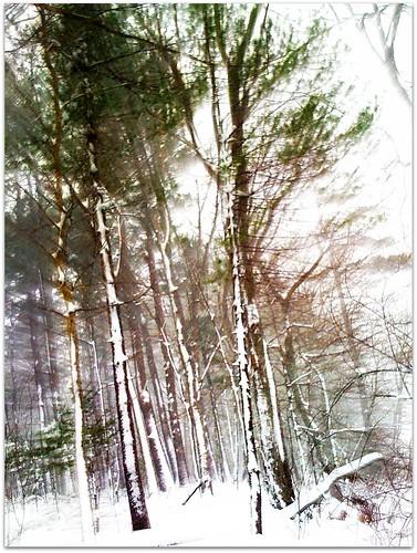 snowood trail blazing