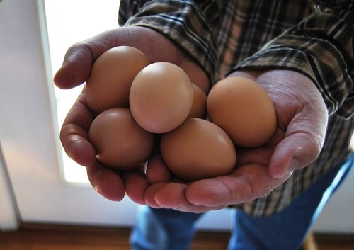 eggs, yay!