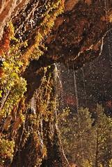 Weeping rocks  Zion National Park, Utah (-ellie_) Tags: mountains landscape utah nationalpark zion fallingwater zionnationalparkutah weepingrocks westernlandscapes