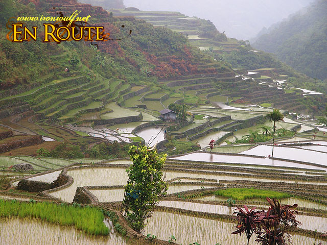 Up Close to the other Hungduan Terraces on our way back