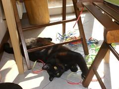 Nefarian's carnival 2009 (daffetta) Tags: blackcat gatto micio gattonero nefarian micionero