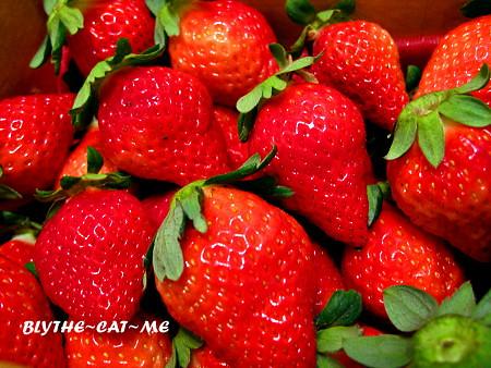 一日方舟草莓園