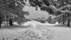 winter (©Andrey) Tags: road winter snow latvia jurmala lettonie юрмала kauguri