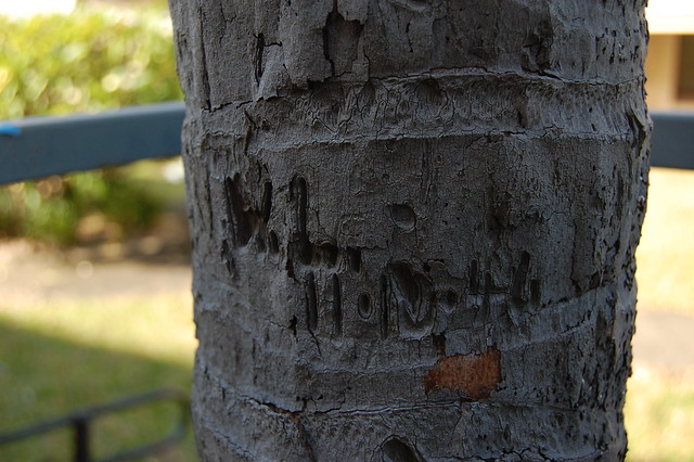 tree inscribed