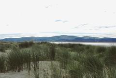 ... once we were ... Beach Wales Dunes Marram Grass Scenics Landscape Grass Nature Water Mountain Solitude Sand Playa     Sea Mood (Almena14) Tags: beach wales dunes marramgrass scenics landscape grass nature water mountain solitude sand playa     sea mood