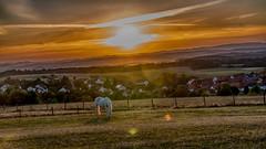 countryside idyll - lndliche Idylle (ralfkai41) Tags: hills hdr sunset natur landscape landschaft sauerland nature sonnenuntergang mountains berge tier dorf horse pferd animal