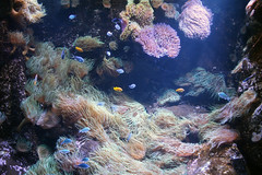 SEA LIFE Sydney Aquarium (NTG's pictures) Tags: sea life sydney aquarium
